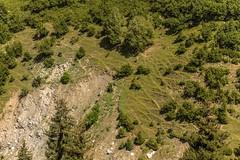 Age old pasture, eroding. (martin palmqvist (ALBUMS)) Tags: patterns georgia mestia july summer trees green pasture