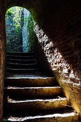 Down the Stone Steps (dilys_thompson) Tags: steps stone ivy dark down up stairs