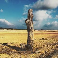 Dutch Pairie (JAMES | AVADA) Tags: wildwildwest sand tree prairie dutch