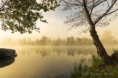 DSC04915_s (AndiP66) Tags: berken bern schweiz ch aare fog mist nebel autumn herbst light licht morning morgen river fluss water wasser reflections spiegelungen kantonbern cantonberne oberaargau switzerland sony sonyalpha 77markii 77ii 77m2 a77ii alpha ilca77m2 slta77ii 1116mm tokina superwideangle tokinaaf1116mmf28 f28 atx116prodx andreaspeters