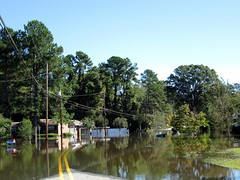 Flood Waters. (dccradio) Tags: lumberton nc northcarolina robesoncounty stormdamage hurricane hurricanematthew matthew aftermath weatherrelated tree trees greenery flood floodwaters flooding flooded water standingwater bodyofwater storm damage