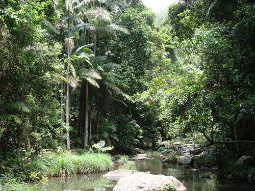 Springbrook Rainforest