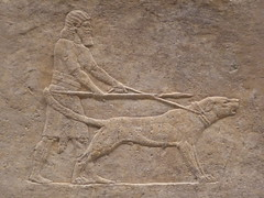 Hunting Dog (Aidan McRae Thomson) Tags: nineveh relief britishmuseum london assyrian sculpture mesopotamia ancient