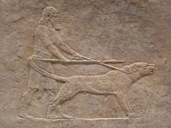 Hunting Dog (Aidan McRae Thomson) Tags: nineveh relief britishmuseum london assyrian sculpture mesopotamia ancient