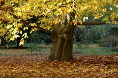 Herbstlaub / autumn leaves (HEN-Magonza) Tags: herbst autumn botanischergartenmainz mainzbotanicalgardens rheinlandpfalz rhinelandpalatinate deutschland germany herbstlaub autumnleaves