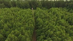 DJI_ (462) (360TV) Tags:   forest