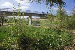 Bridge Over San Lorenzo River