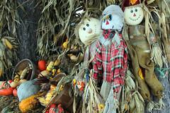 The Halloween Season (Robert F. Carter) Tags: halloween scarecrows scarecrow pumpkins petoskey michigan displays halloweendisplays ourbeautifulworld passiton crookedtreephotographicsociety robertcarterphotographycom ©robertcarter