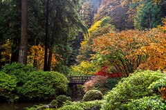 A Walk Through The Garden in Autumn (Cole Chase Photography) Tags: portland oregon japanesegarden fall autumn october canon eos5dmarkiii pacificnorthwest