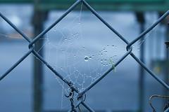 LoveRainyDays💙 (azyeF94) Tags: rainy rainyday drops spiderweb regentropfen flickrnature nikondsrluser nikonphotography nikonflickraward dropphotography exploring nikonflickrawardgold