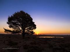 Beaulieu Heath Sunrise (Stephen Munn) Tags: sunrise sunset sky newforest nationalpark pond water heathland heath dawn dusk golden sun