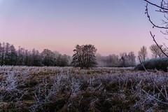 moor,-05699.jpg (iltis-aura) Tags: mksphoto moor sonyalpha6000 winter