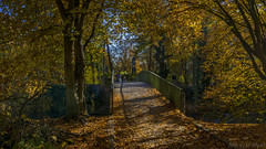 Little Bridge in the avenue of plane trees (KF-Photo) Tags: 169 brcke gelborange herbstbltter hochzeit platanenallee sptherbst tbingen uhlanddenkmal brcke herbstbltter sptherbst tbingen