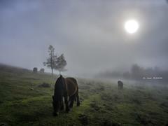 Frío y paz (Jabi Artaraz) Tags: jabiartaraz jartaraz zb euskoflickr yeguas horse niebla frío invierno winter montaña sol sun siluetas hotza natura nature