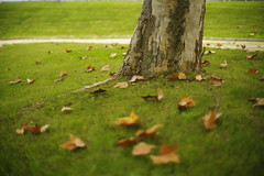 Autumn, end ! (Capturedbyhunter) Tags: fernando caçador marques fajarda coruche sorraia ribatejo santarém portugal pentax k1 revuenon 112 12 f12 55mm 55 mc manual focus focagem foco autumn outono outdoor bokeh