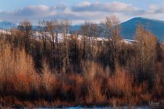 Winters Solitude (jpeder55) Tags: jackson xt2 cold fujifilm grandtetonnationalpark jpedersenphotography landscape nature winter wyoming