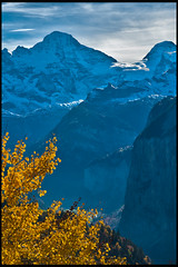 Swiss Autumn time ; the summits of the Breithorn (3,782 m.) the Tschingelhorn (3,557 m. )  and Murren View from Wengen. No. 1346. (Izakigur) Tags: alps alpes alpen berneroberland bern berne berna dieschweiz d700 nikond700 nikkor2470f28 helvetia izakigur breithorn mrren wengen lauterbrunnen ilpiccoloprincipe thelittleprince myswitzerland musictomyeyes jaune yellow