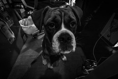 Buddy @ 10mm (Lens a Lot) Tags: paris | 2016 canon efs 1018mm f4556 is stm ultra wide angle dog pet black white