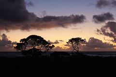 Nukoli'i Beach Sunrise (russ david) Tags: nukolii beach sunrise kauai september 2016 island pacific ocean silhouette