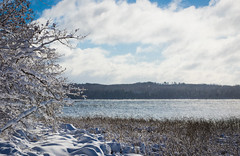 Snowy Kabekona Lake (Wild Birdy) Tags: winter snow lake ice water waves reed reeds cloud clouds snowflakes trre trees white blue icy cloudy cute mn minnesota kabekona november wintery laporte argos storm beautiful lovely