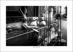 Hare's looking at you (Descended from Ding the Devil) Tags: bw bakewell dof derbyshire beyondbokeh blackandwhite bokeh depthoffield hare monochrome photoborder selectivefocus