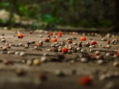 viso da formiga (Gigica Machado) Tags: floor cho nature natureza naturaleza natur seed semente brasil amricadosul