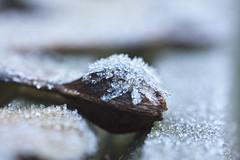 IJskunst (Dimormar!) Tags: ice winter ijs bevroren hazelaar helikoptertje tuin garden art