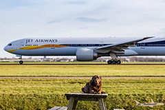 emma is relaxed while I'm pursuing my hobby (antowo1) Tags: emma labrador chocolatelabrador hobby planespotting flugzeug airplane aeroporto takeoff boeing triple7 jetairways polderbaan amsterdam