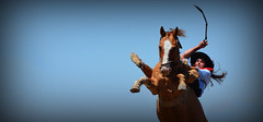 Voando a melena (Eduardo Amorim) Tags: gacho gachos gaucho gauchos cavalos caballos horses chevaux cavalli pferde caballo horse cheval cavallo pferd crioulo criollo crioulos criollos cavalocrioulo cavaloscrioulos caballocriollo caballoscriollos pampa campanha fronteira bag riograndedosul brsil brasil sudamrica sdamerika suramrica amricadosul southamerica amriquedusud americameridionale amricadelsur americadelsud cavalo         hst hest hevonen  brazil eduardoamorim gineteada jineteada