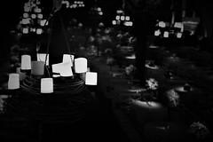 Coudelaria Souza Leo (Beto Almeida Fotgrafo) Tags: betoalmeida job newwedmkt clientenewwedmkt mktdigital betoalmeidafotgrafo betoalmeidafotografia betoalmeidafoto betoalmeidafotografo beto bolodenoiva bolo casamento fotografia fotografo photograph photography wedding weddingphotographer weddingphotography