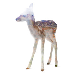 The White Mountains Deer (fbrooks1618P) Tags: deer nature white mountains forest animal cute