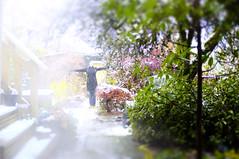 The White Stuff (eddi_monsoon) Tags: threesixtyfive 365 selfportrait selfie self portrait yard snow garden