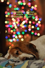 Worrying is a waste of time. (ladybugdiscovery) Tags: nutmeg christmas basset hound
