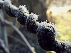 Tournicoti gelé (Noemie.C Photo) Tags: tournicoti frisoti tourne branche liane kiwi givre grivré glace ice gelé vegetable plante plant hiver winter morning matin jardin garden light lumiere macro details nature