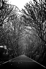 halloween trees (auimeesri) Tags: sky moon black tree halloween nature silhouette mystery night forest dark scary branch background ghost hill tunnel haunted spooky haloween horror