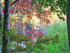 Southern Fall Scene