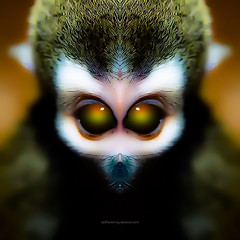 g o o d n i g h t . m a r e (epiclectic) Tags: reflection animal photoshop mirror design graphic wildlife humor perspective manipulation images symmetry reflect symmetrical mutant twisted enhancement epiclecticcom epiflection epiflectionbyepiclecticcom