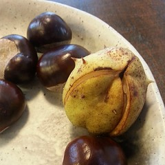 Chestnut pod , not edible!