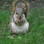 Squirrels at the University of Michigan on a Rainy, Wet Autumn Day (October 13, 2014) thumbnail