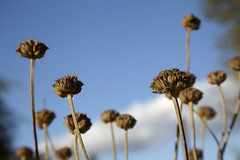 Maxwellton Park Autumn Colours (24) (dddoc1965) Tags: park blue autumn trees sky plants grass clouds scotland photographer sunny seeds paisley leafs hoya plats davidcameron nd1000 maxwellton dddoc positivepaisley