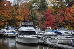 Autumn canvas at at waters edge (HarryOwenMurphy) Tags: autumn ontario fall marina river lakeshore riverboat tugboat oakville burlinton autumnriver fallcanada canadianautumn nothernfall
