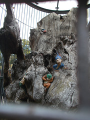 LONDON 1748 (RANCHO COCOA) Tags: wood uk england tree london garden elf trunk kensington kensingtongardens carvings sculpted elves theelfinoak
