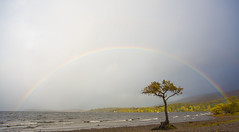 Millarochy Bay Rainbow (intrepidscotland) Tags: tree beach rainbow crow lochlomond millarochybay