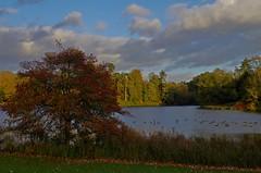 1047-22L (Lozarithm) Tags: landscape lakes 1855 k50 bowood derryhill smcpda1855mmf3556alwr pentaxzoom