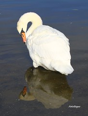 Przyroda 1522 (fotobogus * thank you all for your kind comments !) Tags: przyroda fotobogus
