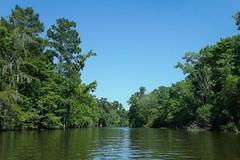 Bayou Boeuf, Louisiana (shanesplanet83) Tags: trees nature louisiana bayou swamp wetlands cypress waterscape lafourcheparish ilobsterit
