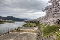 Japan2014_0570 HDR (wallacefsk) Tags: flower japan  sakura tohoku hdr kakunodate