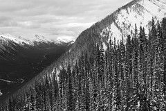 Down the Mountain (JB by the Sea) Tags: blackandwhite bw canada rockies alberta banff rockymountains sulphurmountain banffnationalpark canadianrockies banffgondola september2014