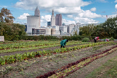 Ohio City's Urban Garden (Franki Blaise) Tags: plants colors garden cityscape gardening farm cleveland farming harvest clevelandohio growth urbangarden landsacpe ohiocity ohiocityurbangarden