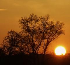 il sole e l'albero al tramonto - Vaccarile di Ostra (walterino1962) Tags: alberi nuvole ombre luci sole riflessi collina ancona arbusti vaccarilediostra